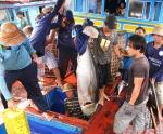 Phú Yên: Sẽ xử lý nghiêm các tàu cá vi phạm vùng biển nước ngoài