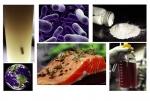 Nguồn dinh dưỡng từ vi khuẩn hấp thu carbon