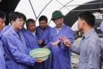 Bắt trúng bệnh của ngành nuôi tôm Quảng Trị
