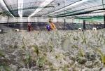 Bạc Liêu: Trung tâm ngành công nghiệp tôm cả nước