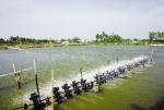 Thực hiện nghiêm quy định về đánh bắt và truy xuất nguồn gốc thủy sản