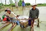 Thách thức của cá tra và tôm