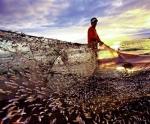 Nâng cao quản lý nghề cá ASEAN