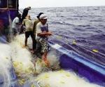 Ngư lưới cụ có cần bảo hiểm?