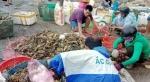 Phú Yên: Hỗ trợ hơn 18 tỷ đồng cho người nuôi tôm hùm bị chết hàng loạt