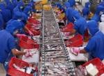 Mô hình nuôi khép kín giúp ổn định nguồn nguyên liệu cá tra ở Đồng Tháp
