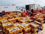 Quảng Ngãi: Nâng cao hiệu quả và bảo vệ môi trường biển