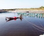 Đồng Tháp: Không nuôi tôm vùng nước ngọt