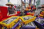Hội Nghề cá Việt Nam: Góp sức vì ngành thủy sản phát triển