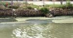 Sông Cạn ô nhiễm, ảnh hưởng đến nuôi trồng thủy sản