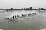 Quận Dương Kinh: Nuôi trồng thủy hải sản gặp khó khăn