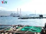 Bình Thuận: Cá nuôi lồng gần Nhiệt điện Vĩnh Tân bị chết hàng loạt