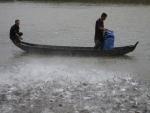 """Nông dân nuôi cá tra """"ôm nợ"""" vì doanh nghiệp ôm tiền tỷ bỏ trốn ra nước ngoài"""