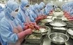 Anh tăng nhập khẩu tôm Việt Nam trong 3 năm trở lại đây