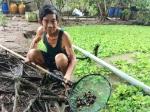 Hậu Giang: Tăng thu nhập nhờ nuôi ốc bươu đen