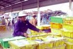 """""""Thẻ vàng"""" của EC: Việt Nam cần nỗ lực hơn nữa"""