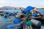 Khi người nuôi trồng thủy sản kêu trời