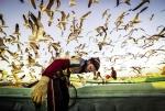 Khai thác cá truyền thống ở Oman