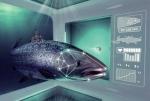 Ifarm: Cứu ngành cá hồi Na Uy khỏi dịch bệnh