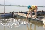 Đảm bảo hạn chế thấp nhất thiệt hại cho các hộ nuôi cá lồng trên sông Đà