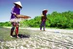 Tảo tần phụ nữ miền biển