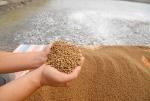 Nguyên liệu đạm trong sản xuất thức ăn