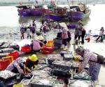 Cần thống nhất trong quản lý hệ thống cảng cá