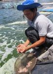 Quảng Bình: Dịch bệnh trên tôm nuôi bùng phát sớm hơn mọi năm
