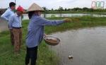 Thái Bình: Nuôi tôm không sử dụng kháng sinh, hóa chất