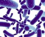Probiotics: Giải pháp thiết yếu trong thủy sản