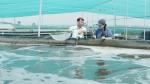 Bạc Liêu: Mô hình tận thu chất thải tôm để nuôi cá