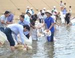 Gia Lai: Thả cá phóng sinh, tái tạo nguồn lợi thủy sản