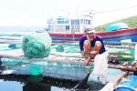 Các vùng nuôi trồng thủy sản lồng bè: Ô nhiễm nguồn nước