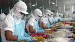 Xuất khẩu mực, bạch tuộc sang Nhật Bản giảm 18%