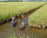 Cà Mau: Huyện Thới Bình sẵn sàng cho vụ tôm mới