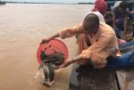 Đồng Tháp: Phóng sinh hơn 1,5 tấn cá xuống sông Tiền