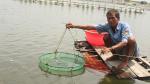 Phú Yên: Khúc mắc gây khó người nuôi tôm