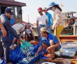 Đà Nẵng tăng cường truy xuất nguồn gốc thủy, hải sản