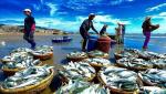 Đừng để thủy sản gặp khó trên 'sân nhà'