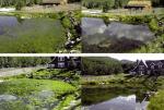 Giải pháp tối ưu diệt tảo trong ao nuôi