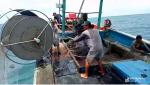 Thuê tàu 67 ra khơi, ngư dân Quỳnh Lưu thu nhập hàng trăm triệu đồng/chuyến