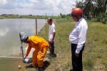Báo động về tai nạn điện trong nuôi tôm