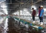 TPHCM: Phát triển nuôi tôm theo hướng an toàn sinh học