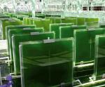 Nhiên liệu sinh học từ phế phẩm thủy sản