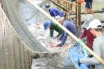 Đồng Tháp: Đề ra lộ trình cấp mã nhận diện ao nuôi cá tra thương phẩm