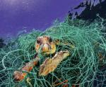 Ngành thủy sản và hiểm họa vi nhựa