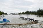 Quảng Trị: Chủ động các biện pháp nuôi tôm an toàn trong mùa mưa lũ