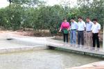 Tham gia chuỗi liên kết nuôi thủy sản: Nông dân yên tâm sản xuất