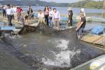 """Hiệu quả bước đầu từ """"Dự án nuôi cá trong lồng bè"""" tại Điện Biên"""