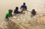 Nuôi cá rô phi theo chuỗi liên kết: Hướng làm giàu mới